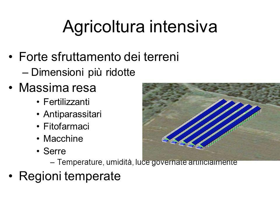 Agricoltura intensiva Forte sfruttamento dei terreni –Dimensioni più ridotte Massima resa Fertilizzanti Antiparassitari Fitofarmaci Macchine Serre –Te
