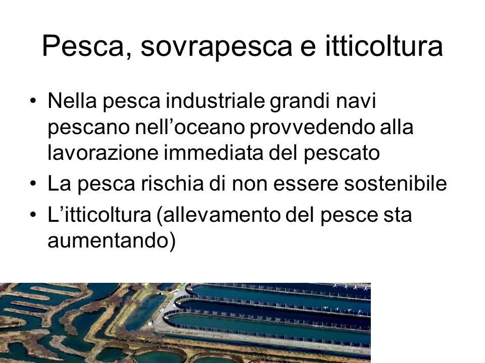 Pesca, sovrapesca e itticoltura Nella pesca industriale grandi navi pescano nell'oceano provvedendo alla lavorazione immediata del pescato La pesca ri