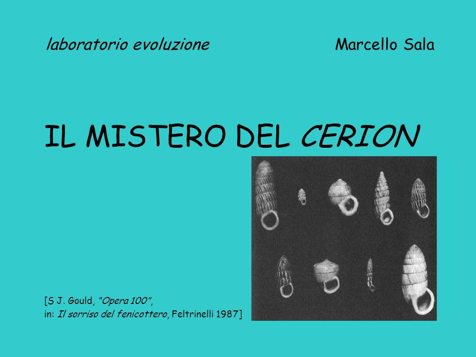 """laboratorio evoluzione Marcello Sala IL MISTERO DEL CERION [S J. Gould, """"Opera 100"""", in: Il sorriso del fenicottero, Feltrinelli 1987]"""