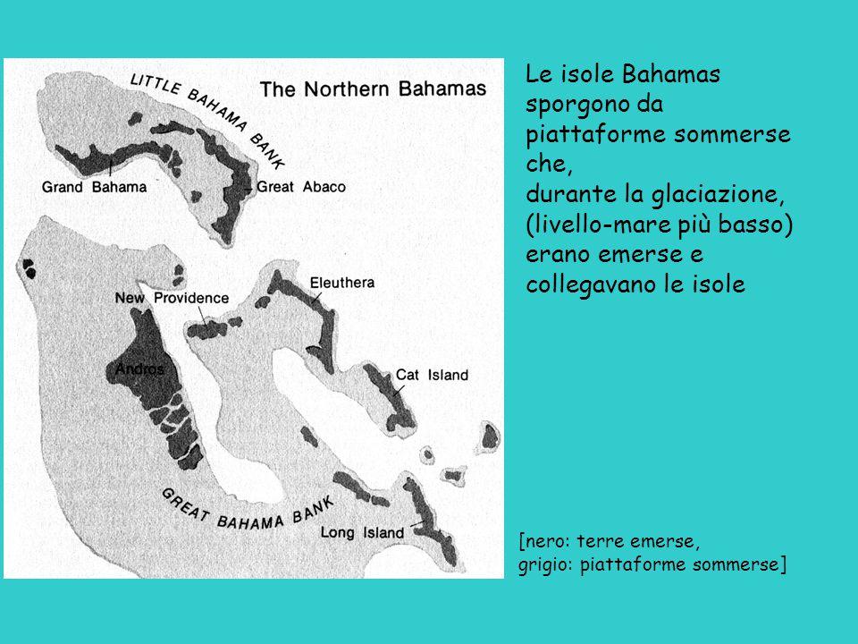 Le isole Bahamas sporgono da piattaforme sommerse che, durante la glaciazione, (livello-mare più basso) erano emerse e collegavano le isole [nero: terre emerse, grigio: piattaforme sommerse]