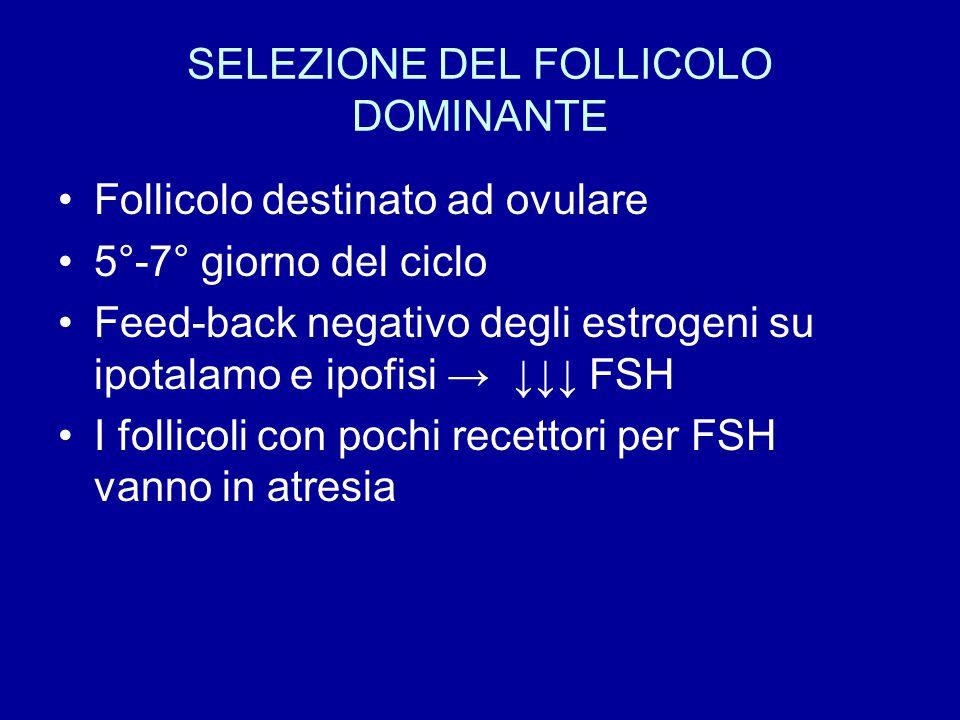 SELEZIONE DEL FOLLICOLO DOMINANTE Follicolo destinato ad ovulare 5°-7° giorno del ciclo Feed-back negativo degli estrogeni su ipotalamo e ipofisi → ↓↓