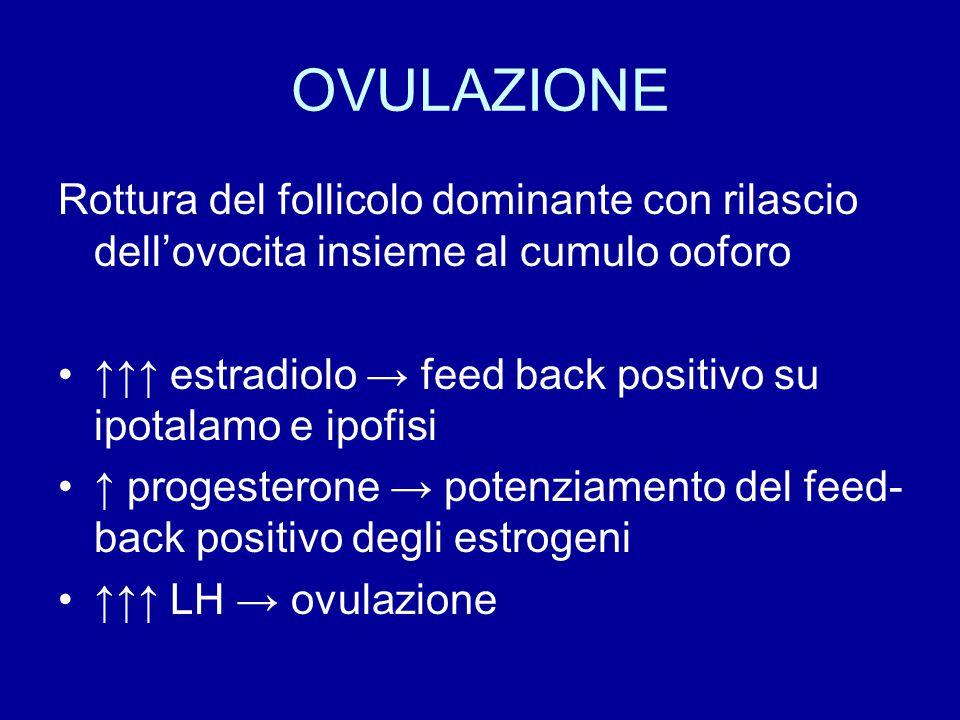 OVULAZIONE Rottura del follicolo dominante con rilascio dell'ovocita insieme al cumulo ooforo ↑↑↑ estradiolo → feed back positivo su ipotalamo e ipofi