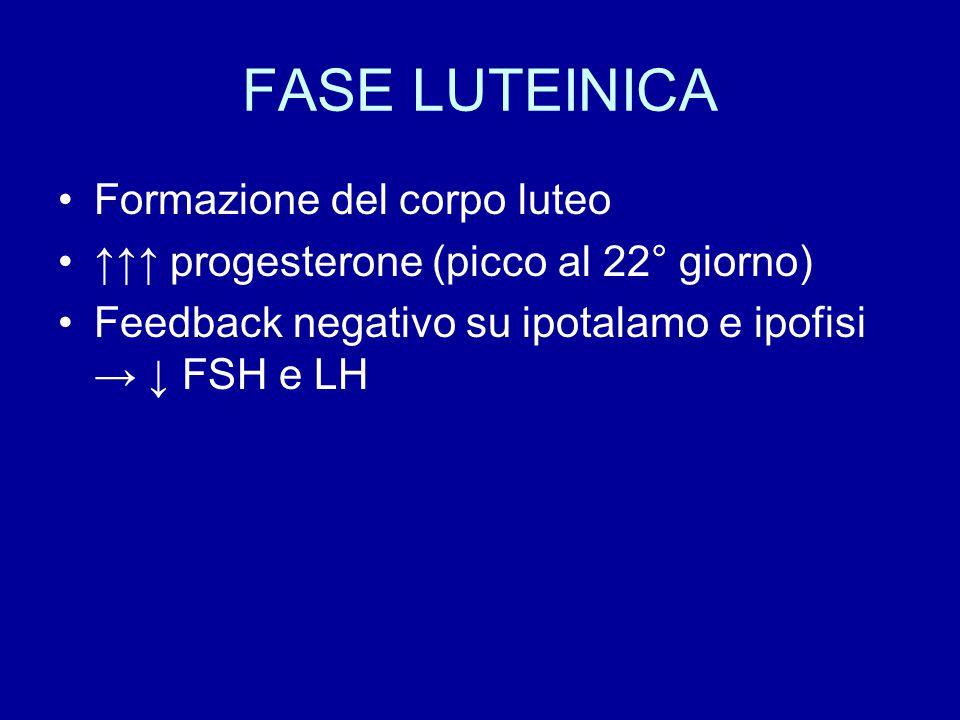 FASE LUTEINICA Formazione del corpo luteo ↑↑↑ progesterone (picco al 22° giorno) Feedback negativo su ipotalamo e ipofisi → ↓ FSH e LH
