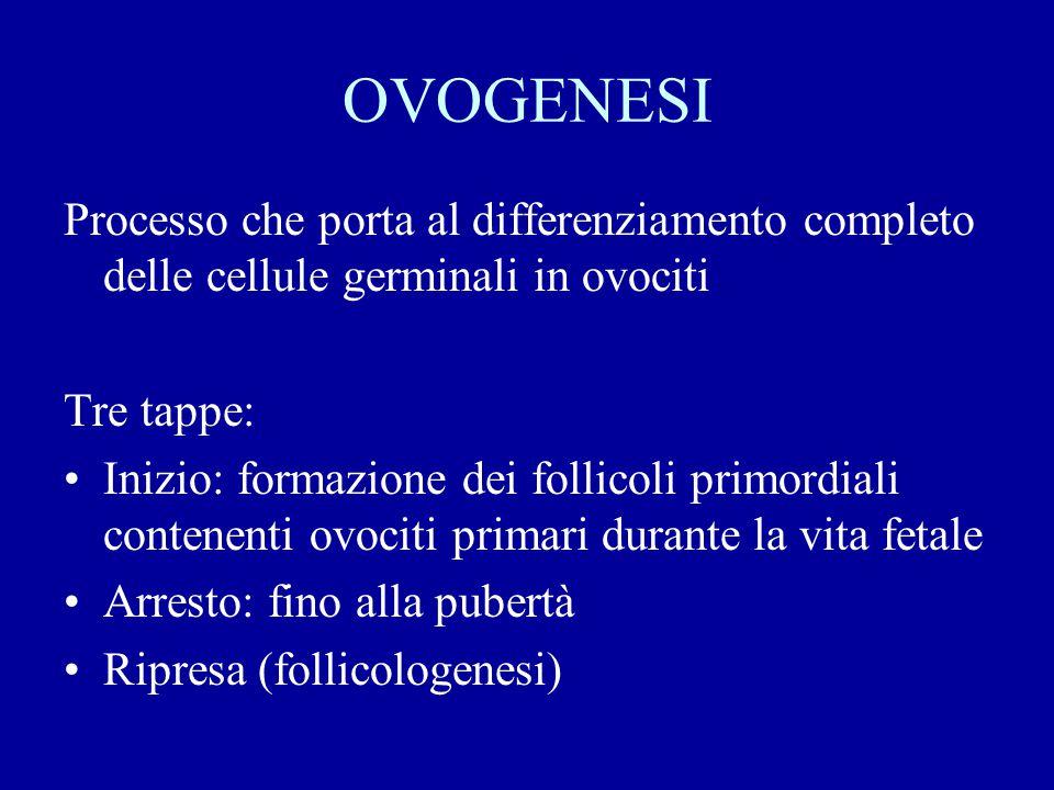 In caso di fecondazione: ↑ hCG ↓ mantenimento del corpo luteo ↓ mantenimento dell'endometrio