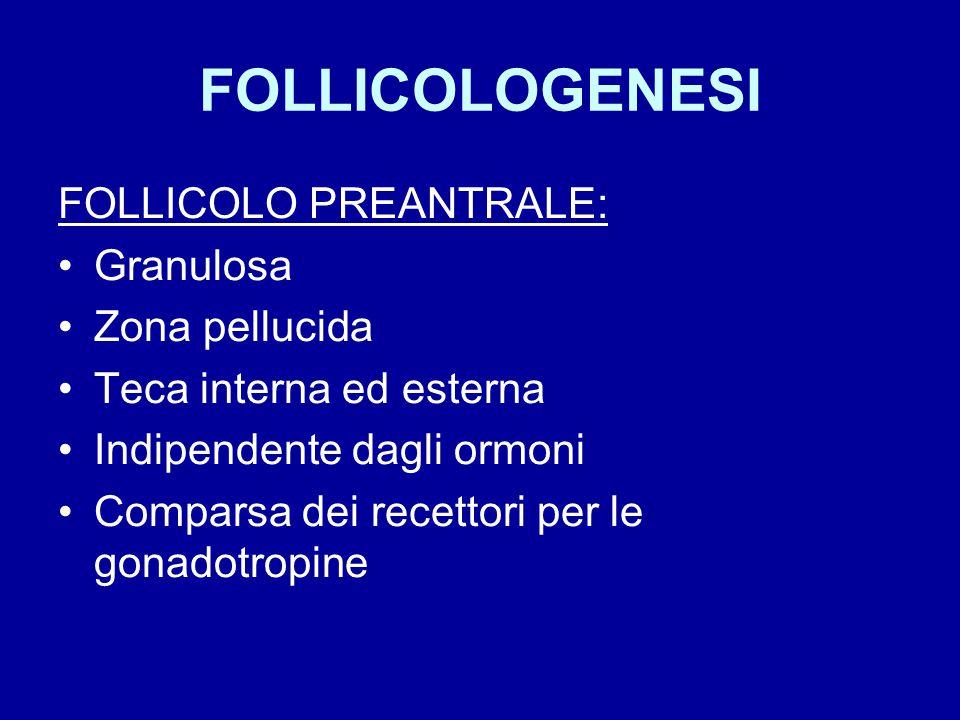FOLLICOLOGENESI FOLLICOLO PREANTRALE: Granulosa Zona pellucida Teca interna ed esterna Indipendente dagli ormoni Comparsa dei recettori per le gonadot