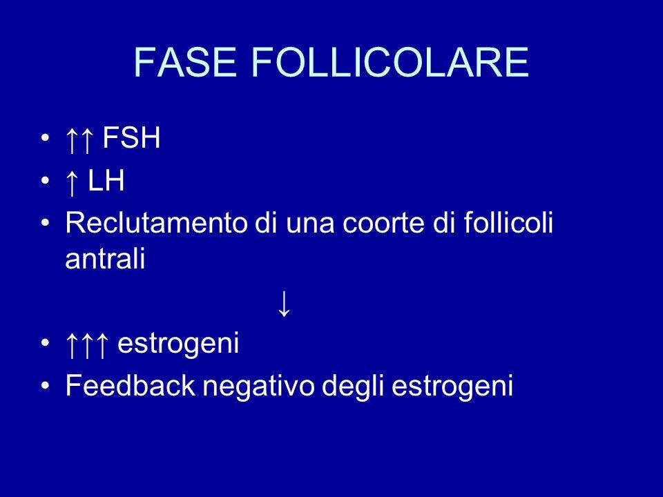 FASE FOLLICOLARE ↑↑ FSH ↑ LH Reclutamento di una coorte di follicoli antrali ↓ ↑↑↑ estrogeni Feedback negativo degli estrogeni