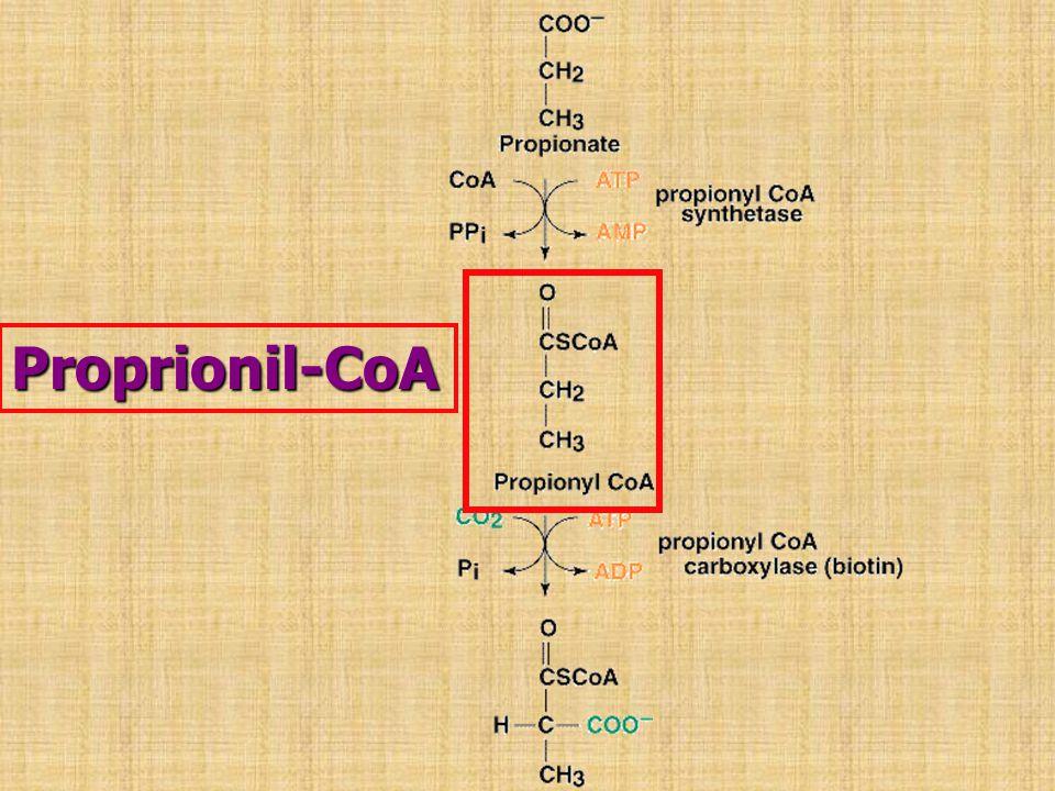Proprionil-CoA
