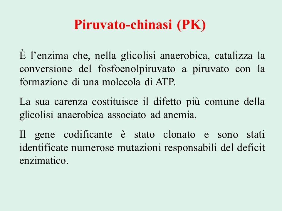 Piruvato-chinasi (PK) È l'enzima che, nella glicolisi anaerobica, catalizza la conversione del fosfoenolpiruvato a piruvato con la formazione di una m