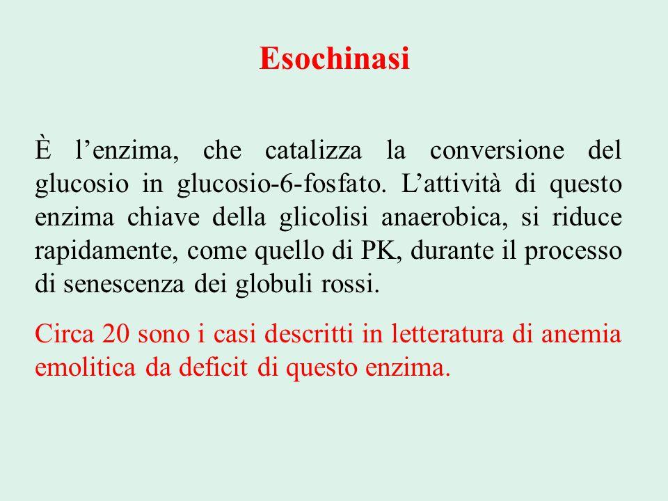 Esochinasi È l'enzima, che catalizza la conversione del glucosio in glucosio-6-fosfato. L'attività di questo enzima chiave della glicolisi anaerobica,