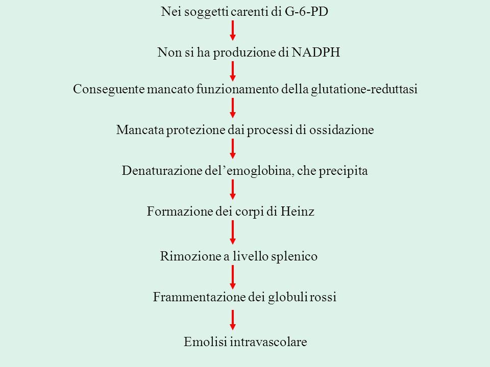 Nei soggetti carenti di G-6-PD Non si ha produzione di NADPH Conseguente mancato funzionamento della glutatione-reduttasi Mancata protezione dai proce