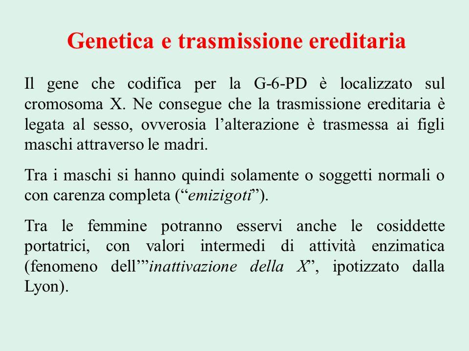 Genetica e trasmissione ereditaria Il gene che codifica per la G-6-PD è localizzato sul cromosoma X. Ne consegue che la trasmissione ereditaria è lega