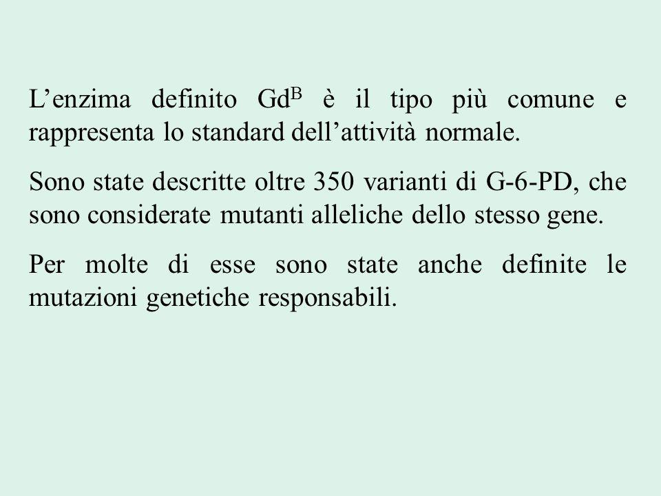 L'enzima definito Gd B è il tipo più comune e rappresenta lo standard dell'attività normale. Sono state descritte oltre 350 varianti di G-6-PD, che so