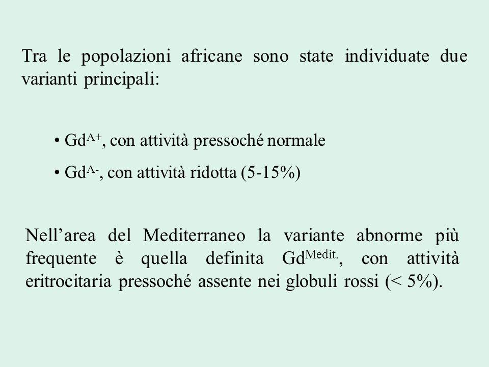 Tra le popolazioni africane sono state individuate due varianti principali: Gd A+, con attività pressoché normale Gd A-, con attività ridotta (5-15%)