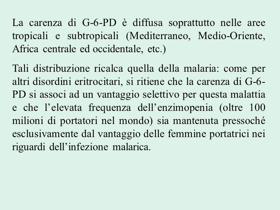 La carenza di G-6-PD è diffusa soprattutto nelle aree tropicali e subtropicali (Mediterraneo, Medio-Oriente, Africa centrale ed occidentale, etc.) Tal