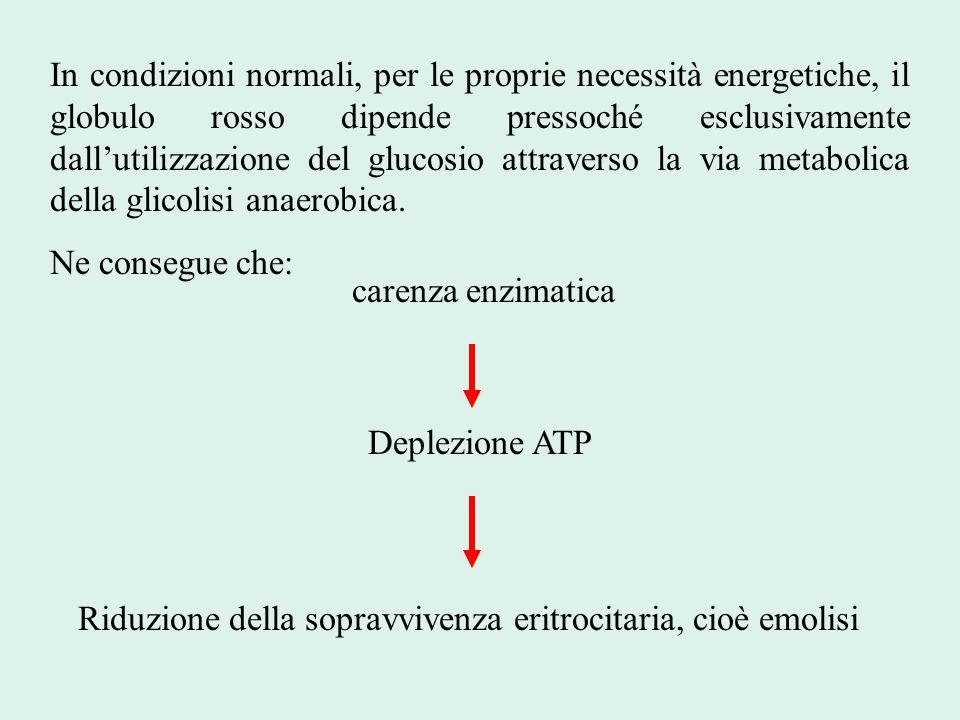 In condizioni normali, per le proprie necessità energetiche, il globulo rosso dipende pressoché esclusivamente dall'utilizzazione del glucosio attrave