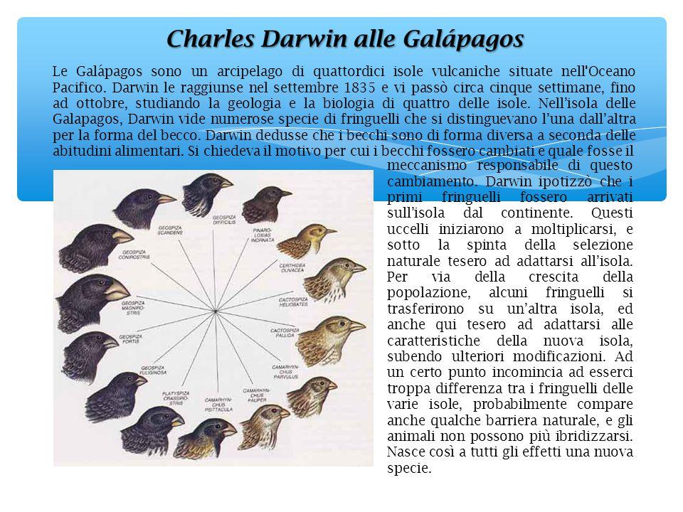 Le Galápagos sono un arcipelago di quattordici isole vulcaniche situate nell'Oceano Pacifico. Darwin le raggiunse nel settembre 1835 e vi passò circa