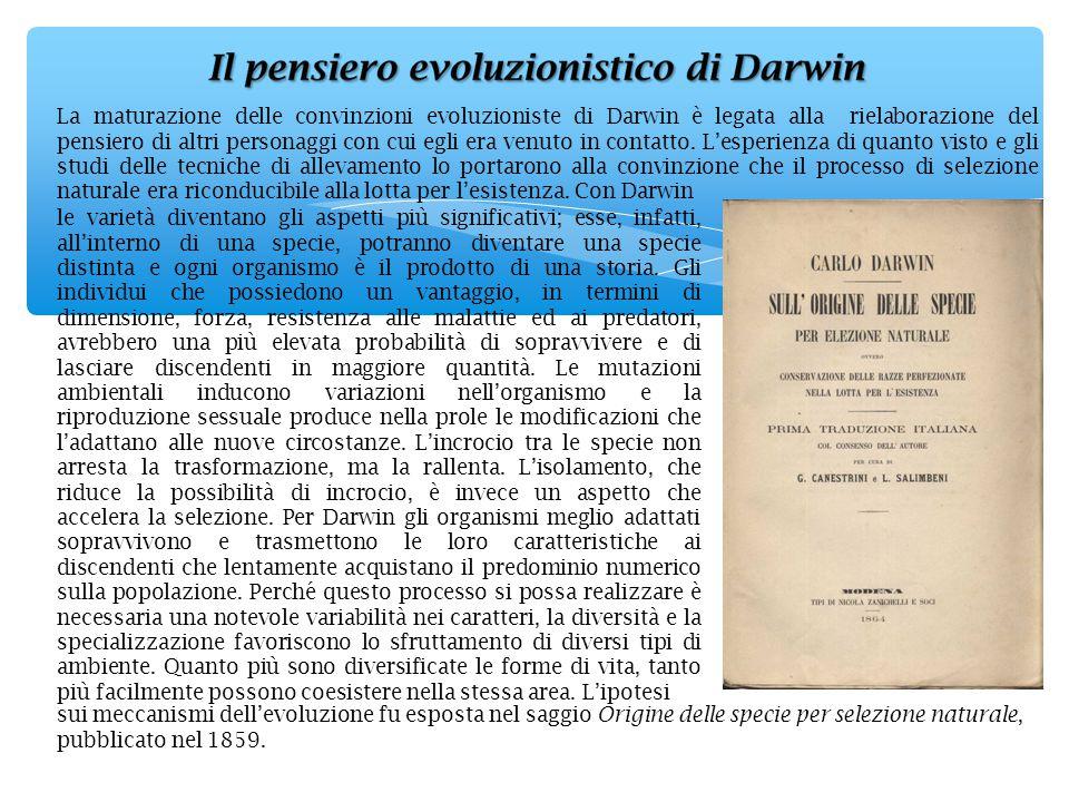 La maturazione delle convinzioni evoluzioniste di Darwin è legata alla rielaborazione del pensiero di altri personaggi con cui egli era venuto in cont