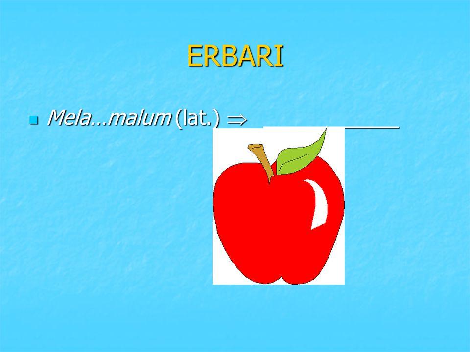 ERBARI Mela…malum (lat.)  ____________ Mela…malum (lat.)  ____________