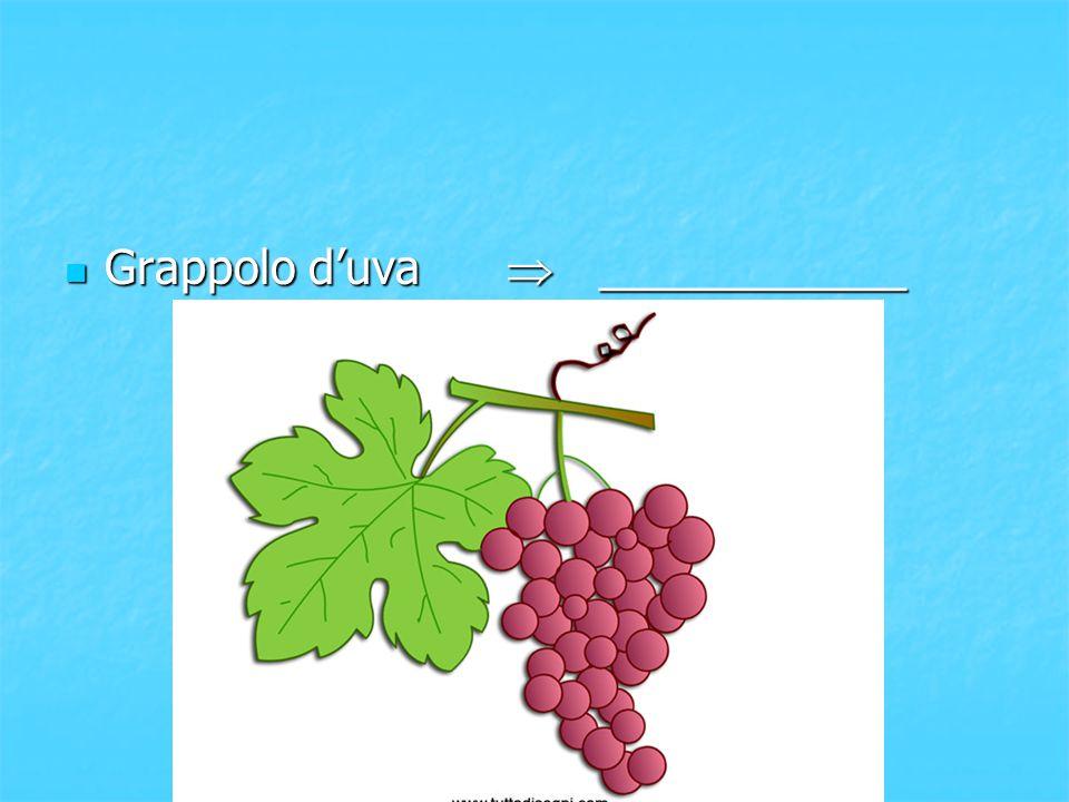 Grappolo d'uva  ____________ Grappolo d'uva  ____________