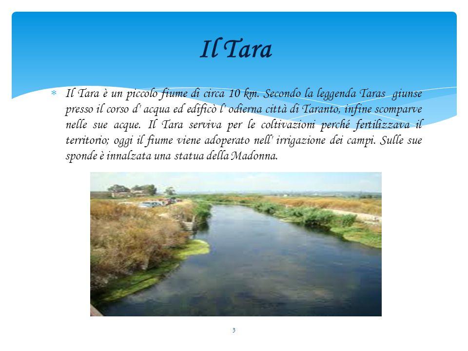 Il Tara è un piccolo fiume di circa 10 km.