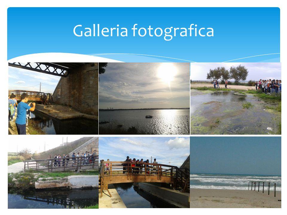 Galleria fotografica 5