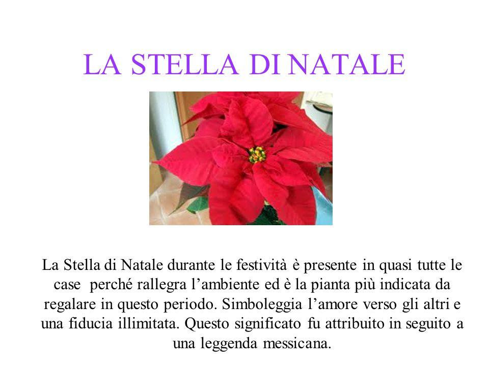 LA STELLA DI NATALE La Stella di Natale durante le festività è presente in quasi tutte le case perché rallegra l'ambiente ed è la pianta più indicata da regalare in questo periodo.