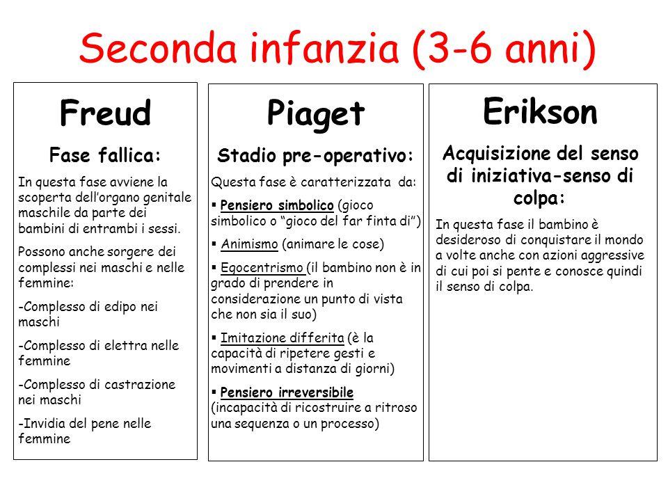 Seconda infanzia (3-6 anni) Freud Fase fallica: In questa fase avviene la scoperta dell'organo genitale maschile da parte dei bambini di entrambi i se