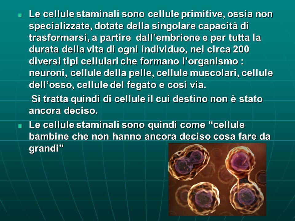 Le cellule staminali sono cellule primitive, ossia non specializzate, dotate della singolare capacità di trasformarsi, a partire dall'embrione e per tutta la durata della vita di ogni individuo, nei circa 200 diversi tipi cellulari che formano l'organismo : neuroni, cellule della pelle, cellule muscolari, cellule dell'osso, cellule del fegato e così via.