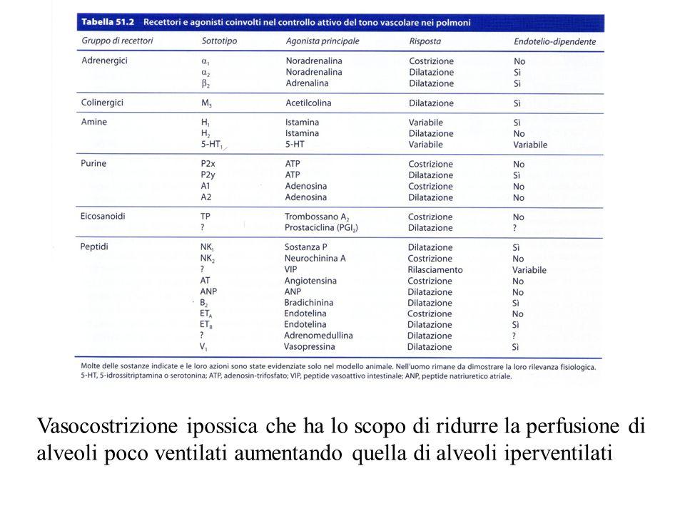 Vasocostrizione ipossica che ha lo scopo di ridurre la perfusione di alveoli poco ventilati aumentando quella di alveoli iperventilati