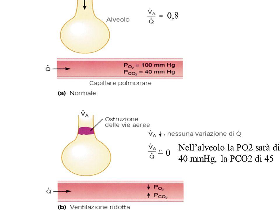 Nell'alveolo la PO2 sarà di 40 mmHg, la PCO2 di 45 = 0 0,8