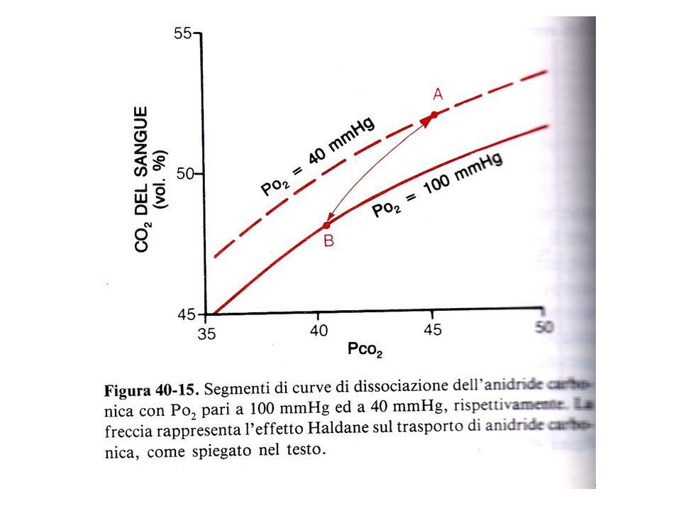 L'effetto Haldane a livello dei polmoni determina una liberazione di CO2 dal sangue a seguito del legame dell'O2 con l'Hb.
