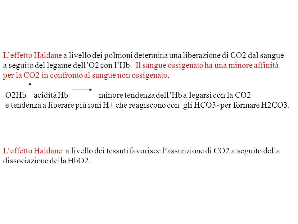 L'effetto Haldane a livello dei polmoni determina una liberazione di CO2 dal sangue a seguito del legame dell'O2 con l'Hb. Il sangue ossigenato ha una