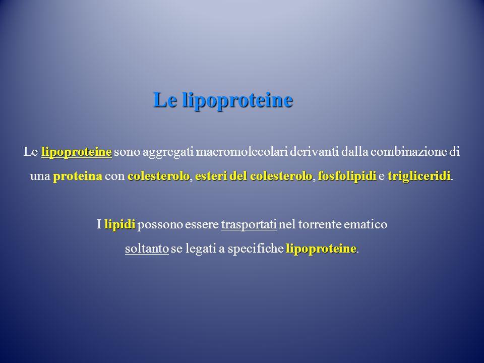 lipoproteine colesteroloesteri del colesterolofosfolipiditrigliceridi Le lipoproteine sono aggregati macromolecolari derivanti dalla combinazione di una proteina con colesterolo, esteri del colesterolo, fosfolipidi e trigliceridi.