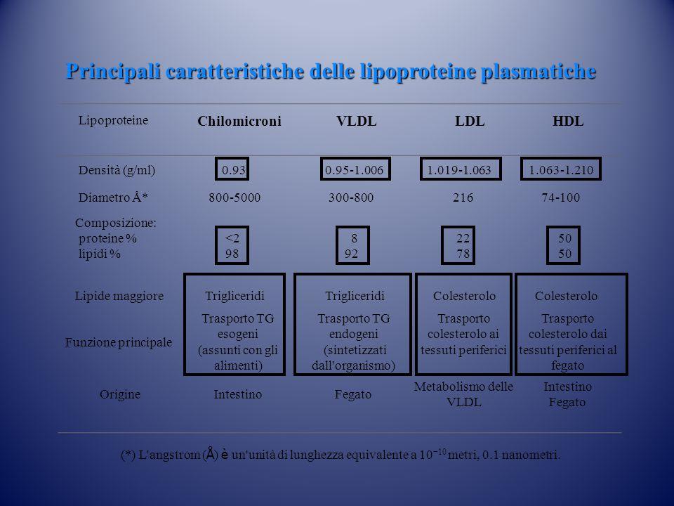 Lipoproteine Chilomicroni VLDL LDL HDL Densità (g/ml) 0.93 0.95-1.006 1.019-1.063 1.063-1.210 Diametro Å* 800-5000 300-800 216 74-100 Composizione: pr
