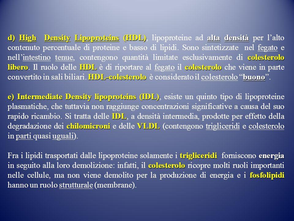 d) High Density Lipoproteins (HDL)alta densità colesterolo liberoHDL colesterolo HDL-colesterolo buono d) High Density Lipoproteins (HDL), lipoproteine ad alta densità per l'alto contenuto percentuale di proteine e basso di lipidi.