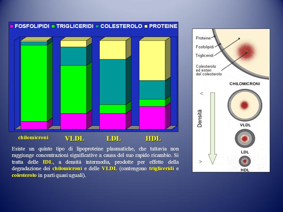chilomicroniVLDL LDL LDL HDL HDL IDL chilomicroniVLDLtrigliceridi colesterolo Esiste un quinto tipo di lipoproteine plasmatiche, che tuttavia non ragg