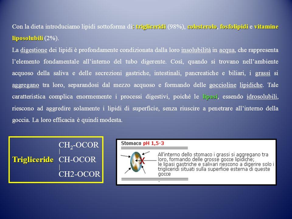 : trigliceridi colesterolofosfolipidivitamine liposolubili Con la dieta introduciamo lipidi sottoforma di: trigliceridi (98%), colesterolo, fosfolipid