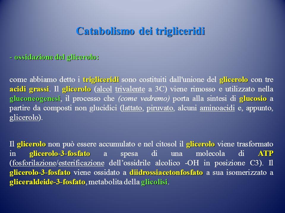 Catabolismo dei trigliceridi - ossidazione del glicerolo: trigliceridiglicerolo acidi grassiglicerolo gluconeogenesiglucosio come abbiamo detto i trig