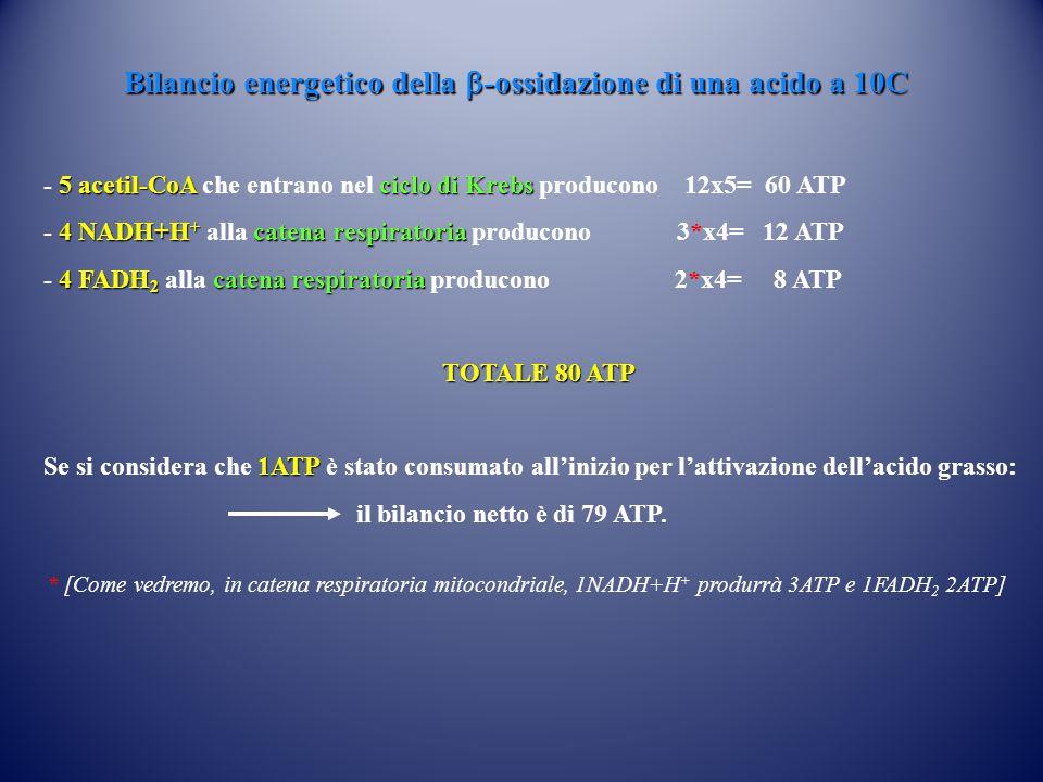 Bilancio energetico della  -ossidazione di una acido a 10C 5acetil-CoA ciclo di Krebs - 5 acetil-CoA che entrano nel ciclo di Krebs producono 12x5= 60 ATP 4NADH+H + catena respiratoria - 4 NADH+H + alla catena respiratoria producono 3*x4= 12 ATP 4 FADH 2 catena respiratoria - 4 FADH 2 alla catena respiratoria producono 2*x4= 8 ATP TOTALE 80 ATP 1ATP Se si considera che 1ATP è stato consumato all'inizio per l'attivazione dell'acido grasso: il bilancio netto è di 79 ATP.