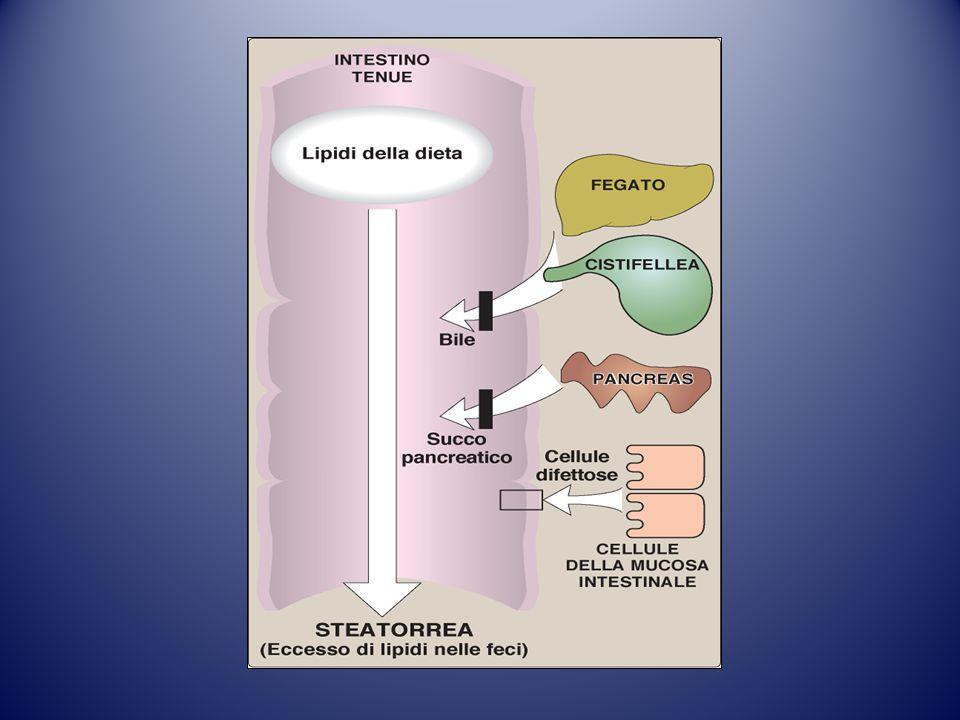 chilomicroniVLDL LDL LDL HDL HDL IDL chilomicroniVLDLtrigliceridi colesterolo Esiste un quinto tipo di lipoproteine plasmatiche, che tuttavia non raggiunge concentrazioni significative a causa del suo rapido ricambio.