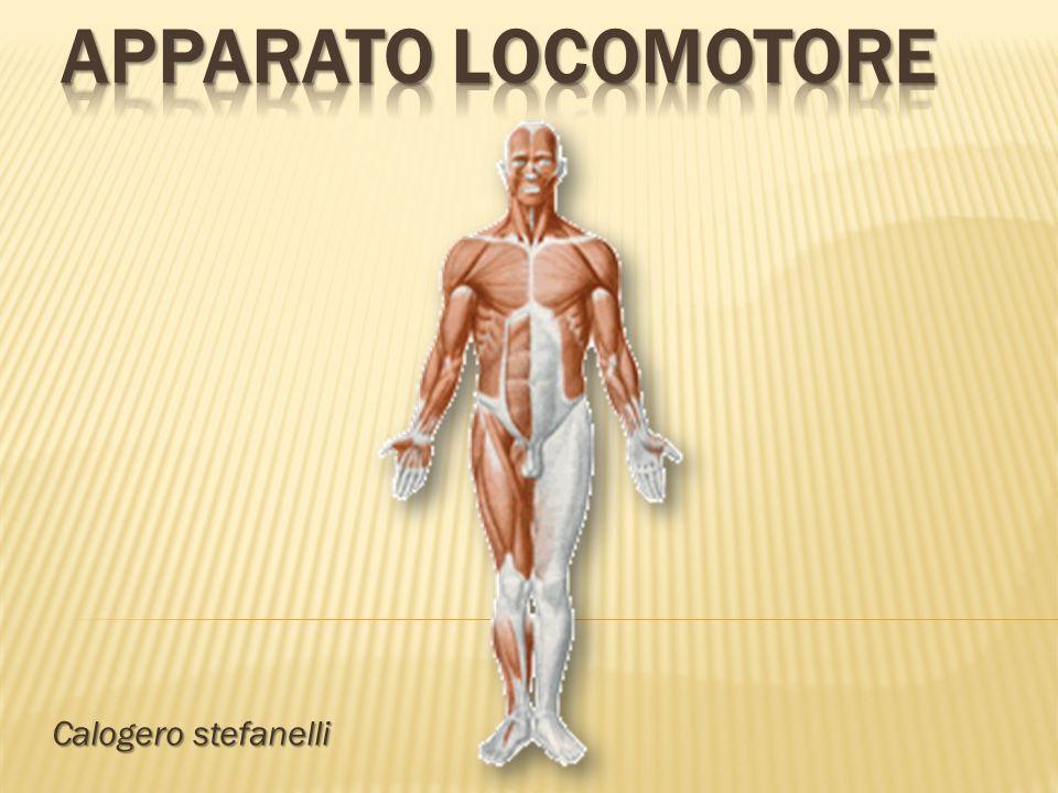 Calogero stefanelli