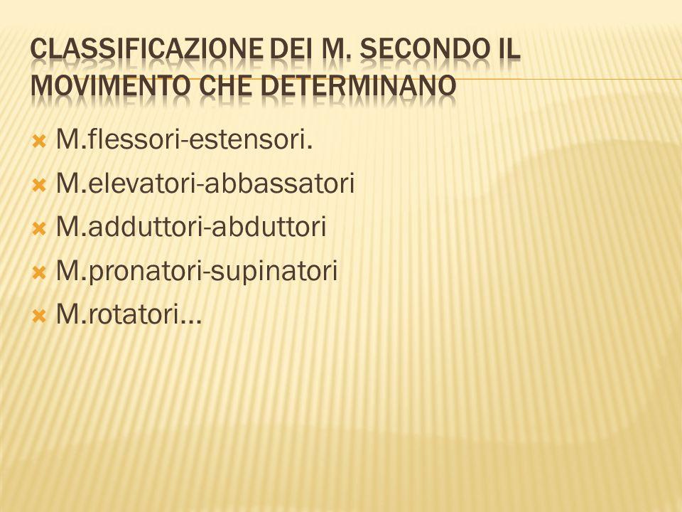  M.flessori-estensori.  M.elevatori-abbassatori  M.adduttori-abduttori  M.pronatori-supinatori  M.rotatori...