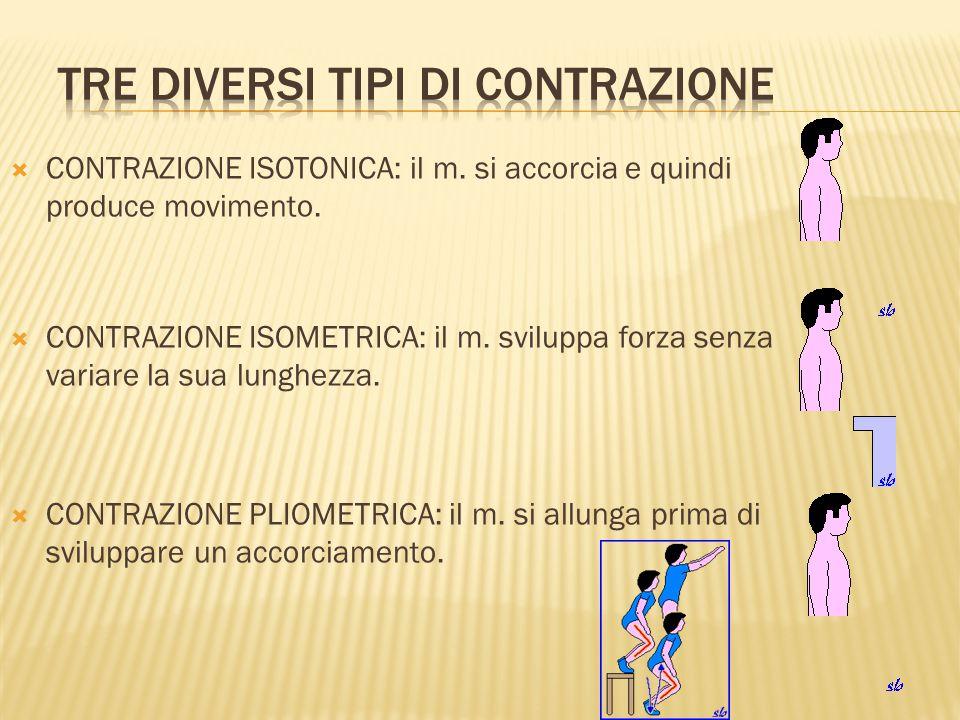  CONTRAZIONE ISOTONICA: il m. si accorcia e quindi produce movimento.  CONTRAZIONE ISOMETRICA: il m. sviluppa forza senza variare la sua lunghezza.