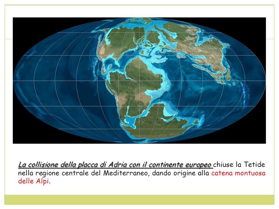 La collisione della placca di Adria con il continente europeo La collisione della placca di Adria con il continente europeo chiuse la Tetide nella regione centrale del Mediterraneo, dando origine alla catena montuosa delle Alpi.