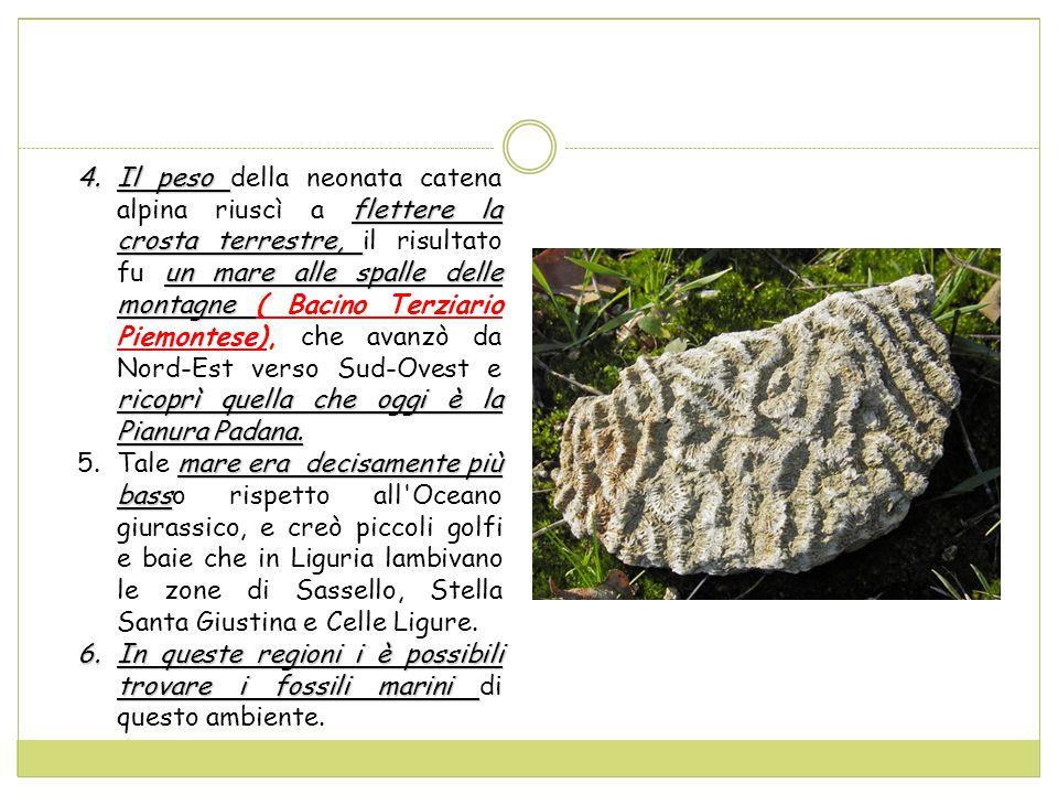 4.Il peso flettere la crosta terrestre, un mare alle spalle delle montagne ricoprì quella che oggi è la Pianura Padana.