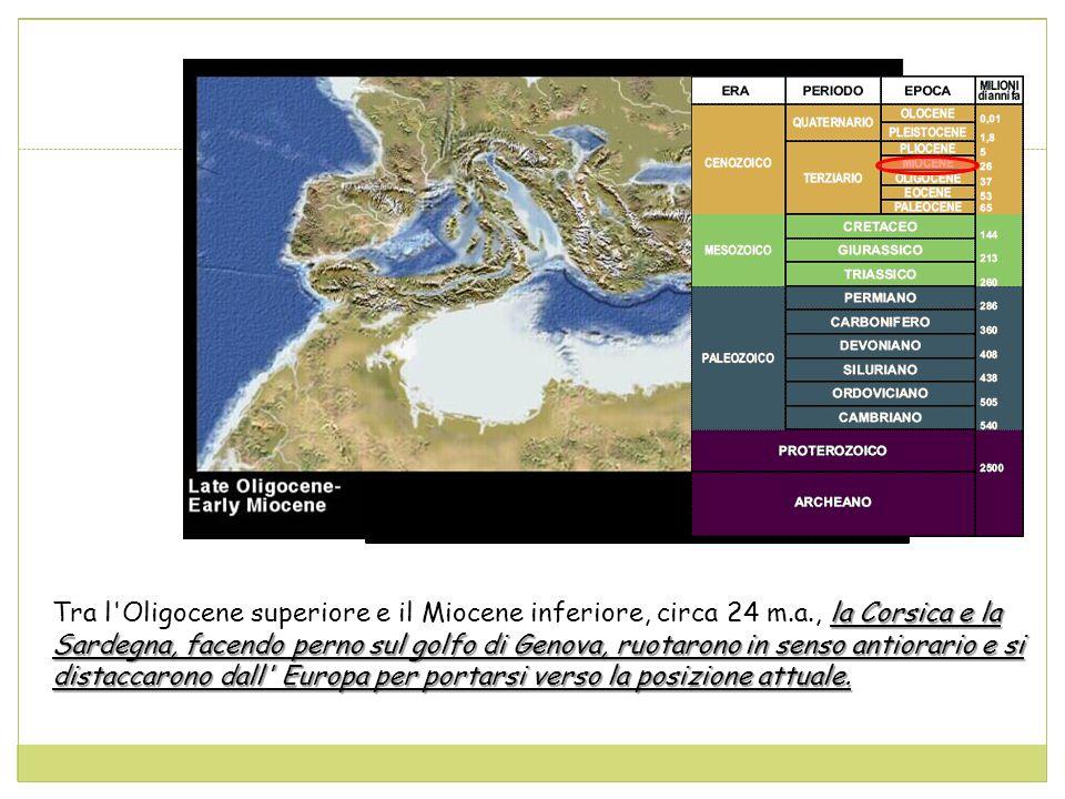 la Corsica e la Sardegna, facendo perno sul golfo di Genova, ruotarono in senso antiorario e si distaccarono dall Europa per portarsi verso la posizione attuale.