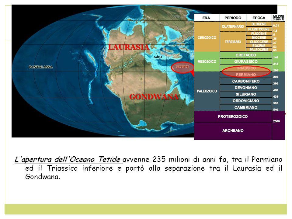 L apertura dell Oceano Tetide L apertura dell Oceano Tetide avvenne 235 milioni di anni fa, tra il Permiano ed il Triassico inferiore e portò alla separazione tra il Laurasia ed il Gondwana.