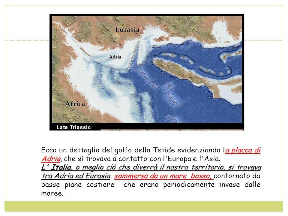a placca di Adria Ecco un dettaglio del golfo della Tetide evidenziando la placca di Adria, che si trovava a contatto con l Europa e l Asia.