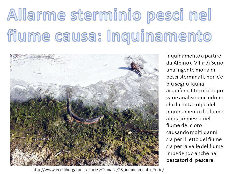 Inquinamento a partire da Albino a Villa di Serio una ingente moria di pesci sterminati, non c'è più segno fauna acquifera. I tecnici dopo varie anali