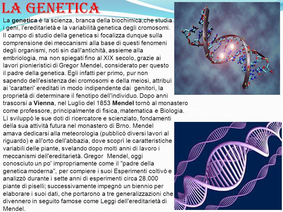 La genetica La genetica è la scienza, branca della biochimica,che studia i geni, l'ereditarietà e la variabilità genetica degli cromosomi. Il campo di
